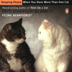 Cat-Vs-Cat-Keeping-Peace-When-You-Have-More-Than-One-Cat-0