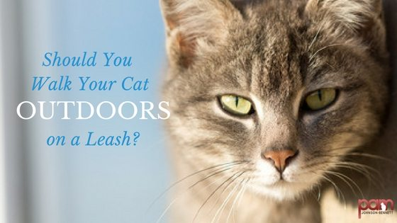 should you walk your cat outdoors on a leash
