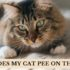why does my cat pee on the bed