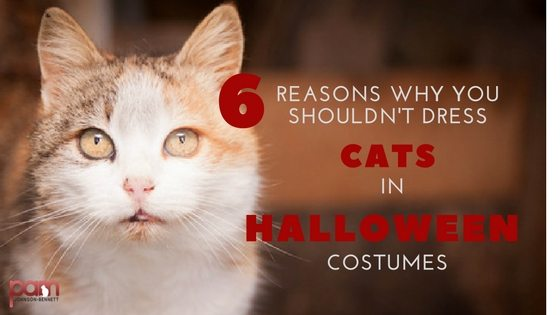 Six Reasons Why You shouldn't Dress Cats in Halloween Costumes