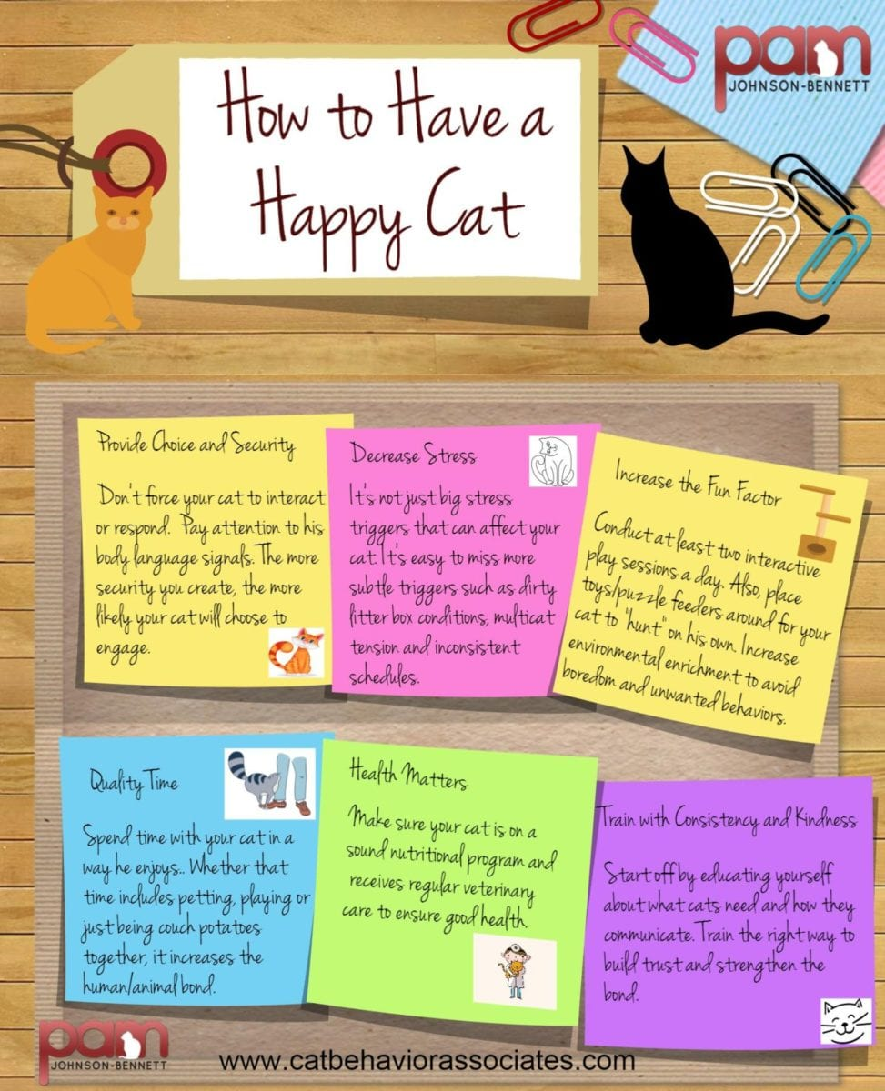 make your cat happy inforgraphic high res