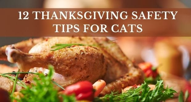 12 thanksgiving safety tips for cats