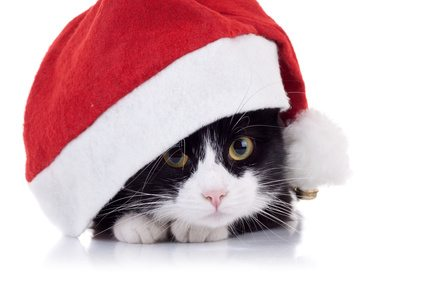 How to Keep Your Cat Away From the Christmas Tree