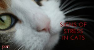 signs of stress in cats