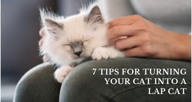 7 tips for turning your cat into a lap cat