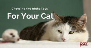 choosing the right toys for your cat