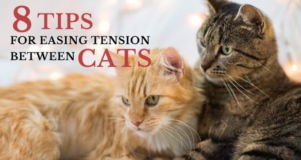 8 tips for easing tension between cats