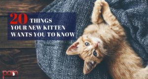 20 things your new kitten wants you to know