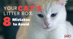 your cat's litter box: 8 mistakes to avoid