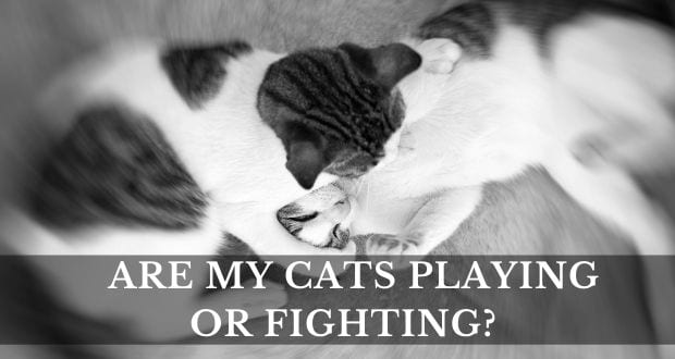 ARE MY CATS PLAYING OR FIGHTING