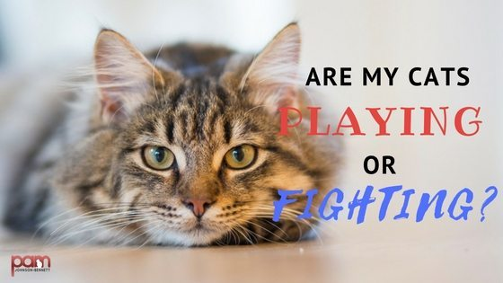 Are my Cats playing or fighting (1)