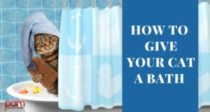 how-to-give-your-cat-a-bath