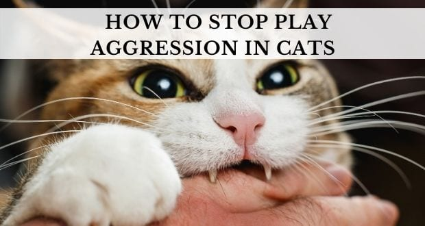 how to stop play aggression in cats