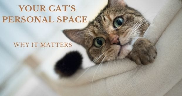 your cat's personal space