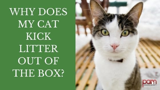 Why Does My Cat Kick Litter out of the Box?