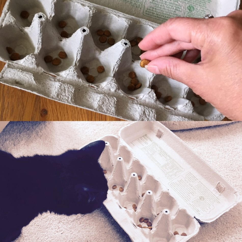 An egg carton makes a wonderful level 1 puzzle feeder