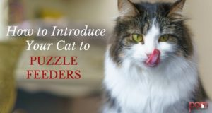 how to introduce your cat to puzzle feeders
