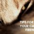 tips for calming your cat during fireworks