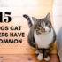 15 things cat owners have in common