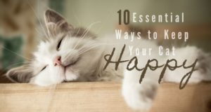 10 essential ways to keep your cat happy