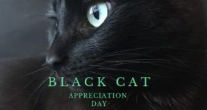 black cat appreciation day
