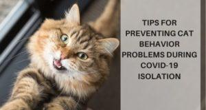 Cat Behavior Pooping Outside The Litter Box