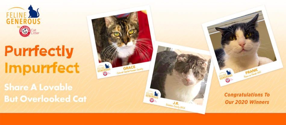 purrfectly impurrfect shelter cat winners