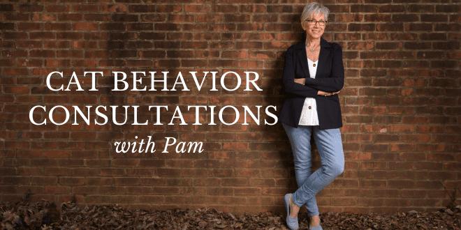 cat behavior consultations